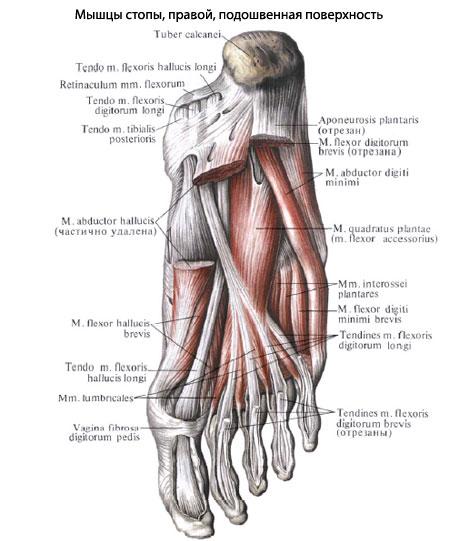 articulațiile mușchilor picioarelor decât a trata unguent pentru durere în articulațiile brațelor și picioarelor