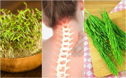 plante medicinale pentru tratarea articulațiilor și oaselor cumpărare glucosamină condroitină san