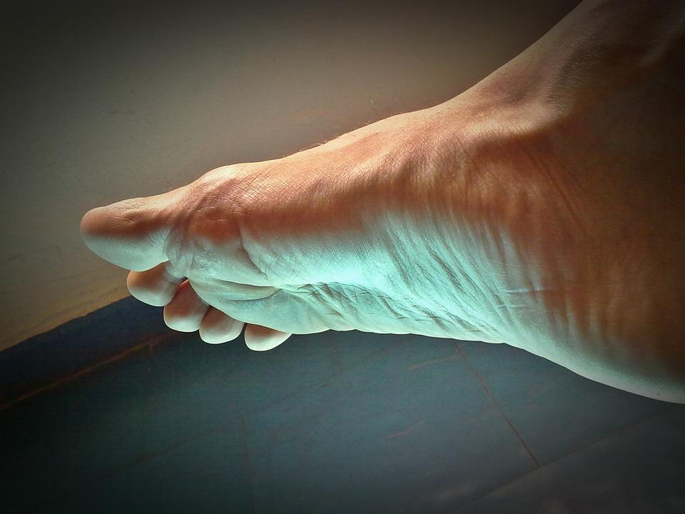 Anatomia piciorului