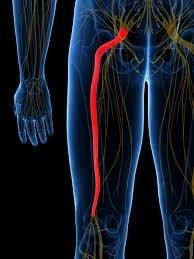 durerile de spate in zona bazinului condroitină 1000 de medicamente
