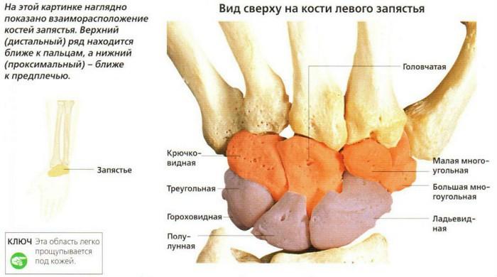 unguent de artrită la genunchi dacă articulațiile poplitee doare
