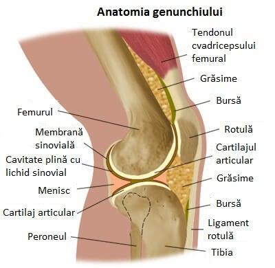 care sunt inflamațiile genunchiului
