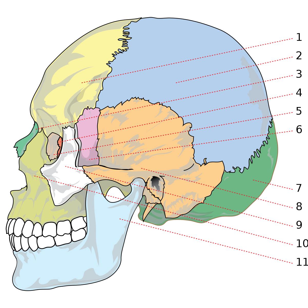 durere în articulația zigomatică tratamentul coxartrozei bolii articulare