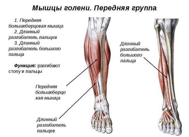 articulațiile mușchilor picioarelor decât a trata tratamentul simptomelor bolii de umăr