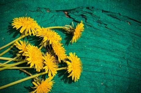 Flori de păpădie pentru dureri articulare