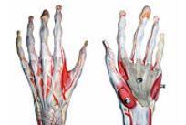 articulații în palma mâinii tale tratamentul hemangiomului la genunchi