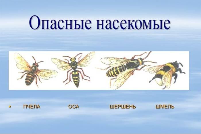 Pâine de albine și tratament comun