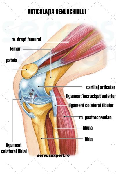durere dureroasă și o criză în articulația genunchiului