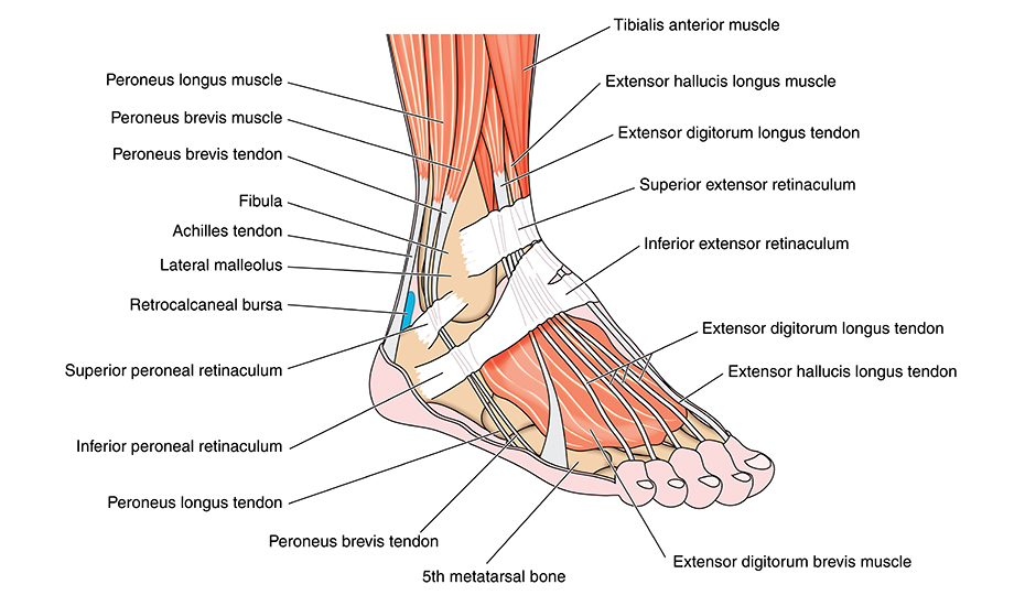 Durere bruscă în articulația piciorului, durere bruscă bruscă în piciorul drept