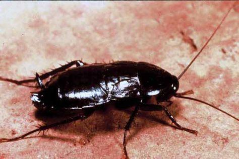 tratamentul articulației vindecător de gândaci dezvoltarea artritei genunchiului