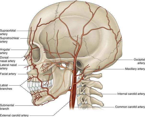 artrita faciala artroso