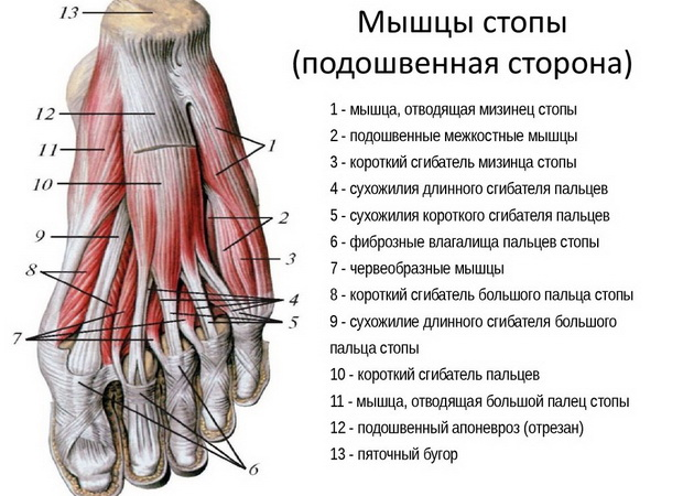 articulațiile mușchilor picioarelor decât a trata manșeta articulației umărului