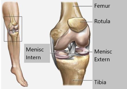 dacă articulațiile genunchilor și coatelor doare dureri articulare datorate leziunilor coloanei vertebrale