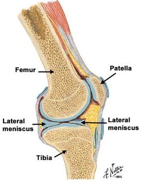 menisci rupt al tratamentului articulației genunchiului tratament comun de molid conic
