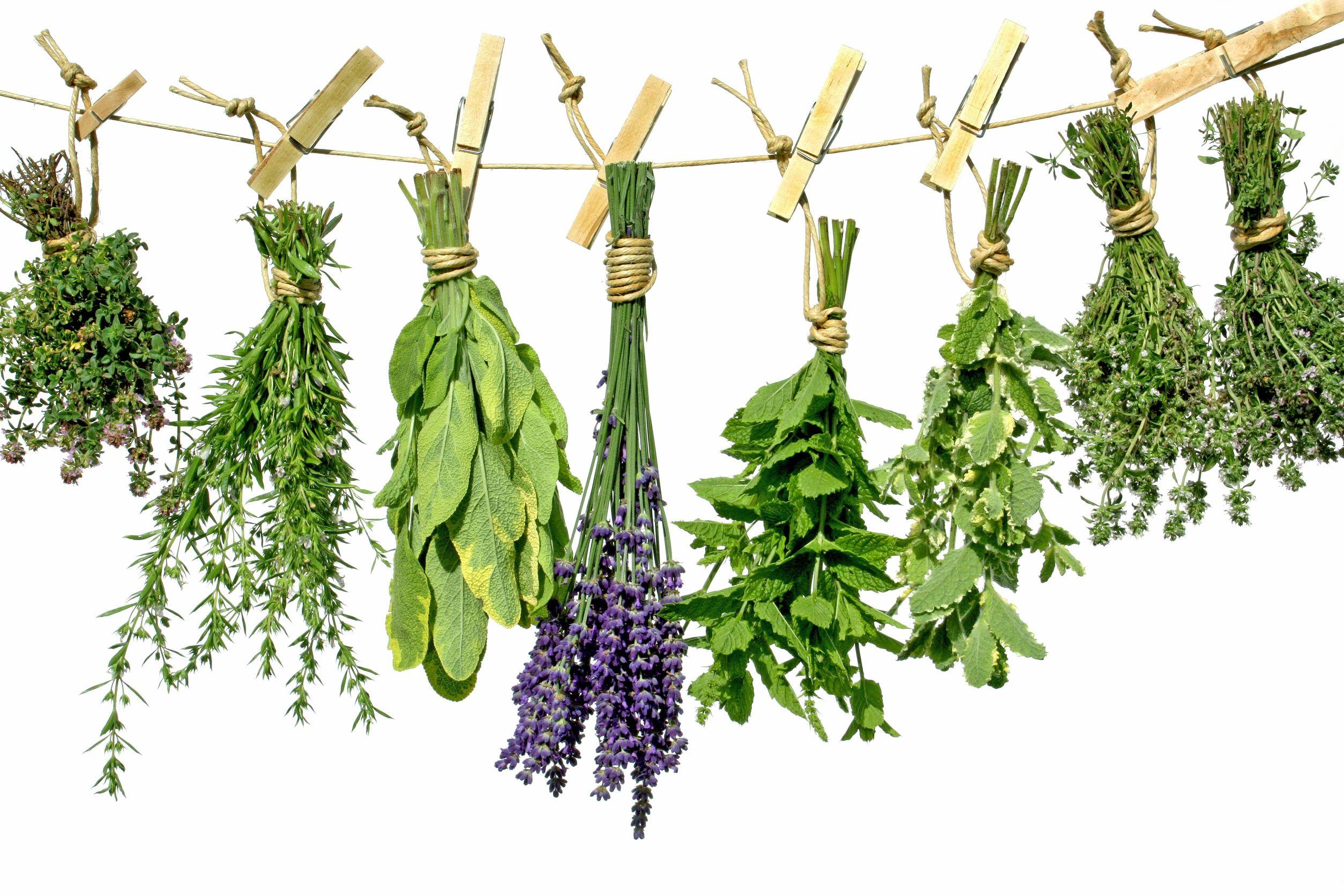 Tratarea în comun a uleiului de brusture, Care sunt beneficiile uleiului de brusture - buzauplay.ro
