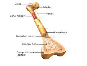 falsă articulație după tratamentul fracturii de claviculă
