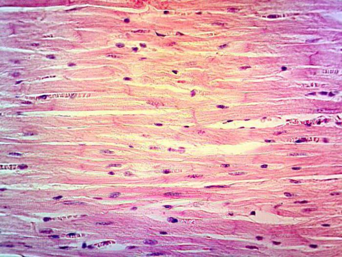 tip de regenerare a țesutului conjunctiv liber