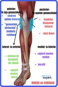 creme ale genunchiului alergare și dureri articulare
