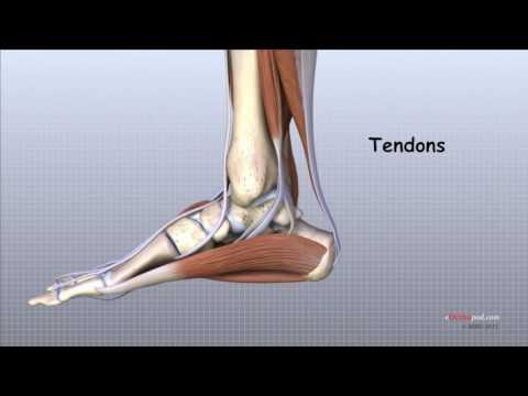 artrita artroso deformantă a gleznei