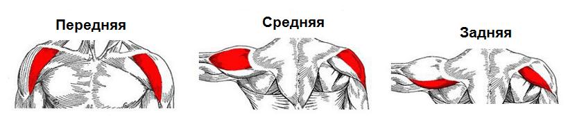de ce doare mușchii articulației umărului brațului