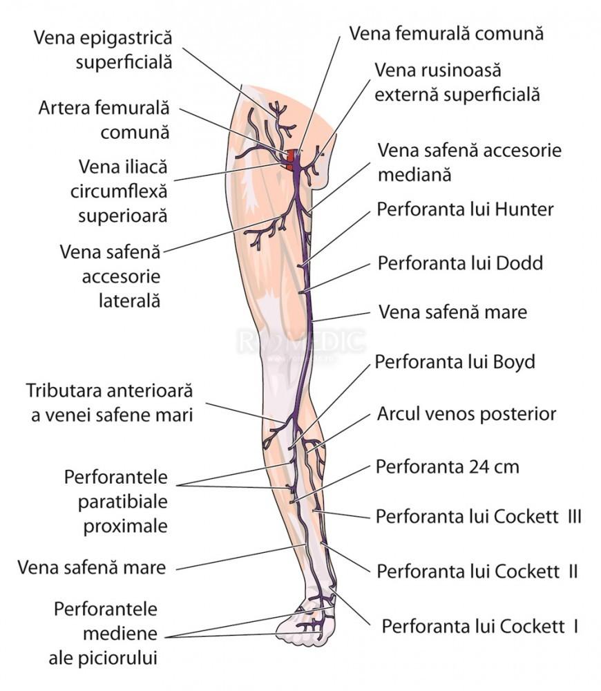 venele ies și articulațiile doare autocolante pentru dureri articulare