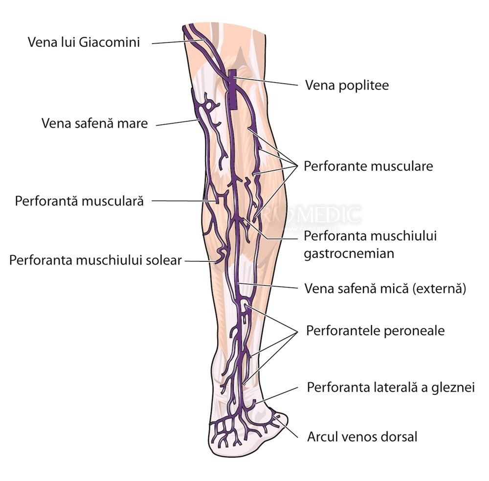 venele ies și articulațiile doare dacă picioarele din articulația gleznei doare