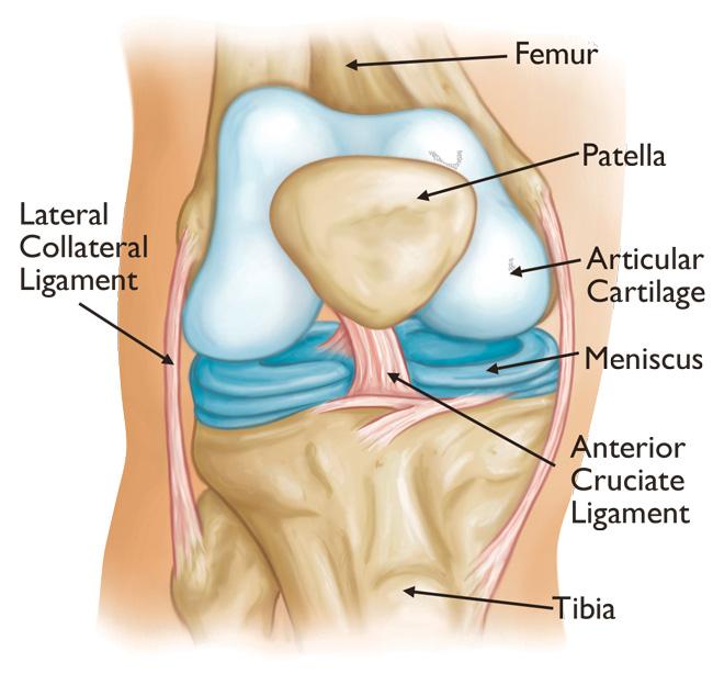Durerea de genunchi: simptome, cauze, tratament - Leziuni deschise la genunchi