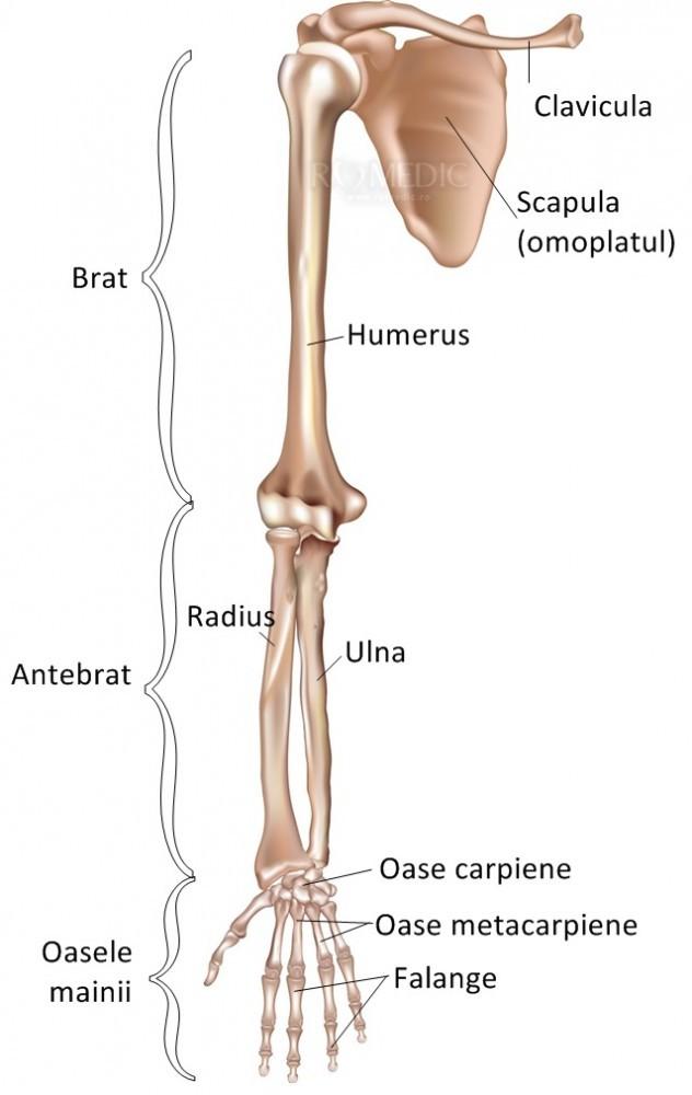Ce este spondilartroza și artroza articulațiilor vertebrale costale dureri ale oaselor șoldului