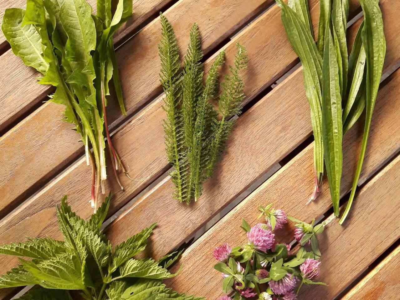 plante medicinale pentru tratarea articulațiilor și oaselor unguente pentru întinderea articulației umărului