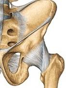articulația șoldului nu tratează nuclee de osificare