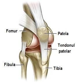 Articulațiile genunchiului rănite din lateral. Au articulațiile ce