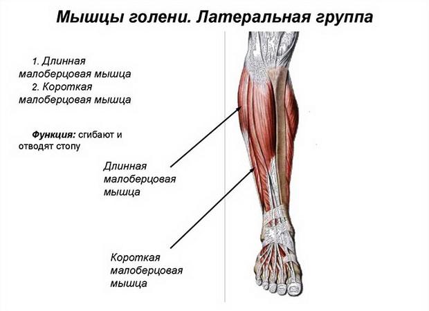 articulațiile mușchilor picioarelor decât a trata umflarea și durerea articulației gleznei decât tratamentul