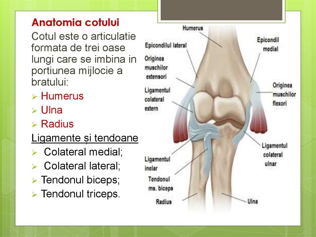 Facilitati de tratament, durere in articulatia cotului pagina 3