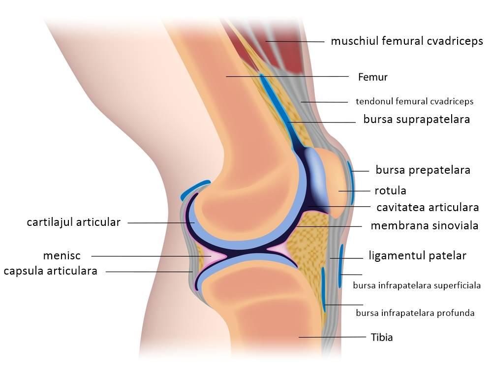 artroza genunchiului asta articulația umflată și dureroasă a degetului mic