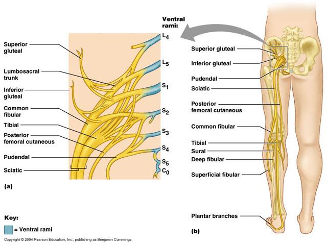 tratament articular lombosacral articulațiile de pe degete sunt lărgite și dureroase