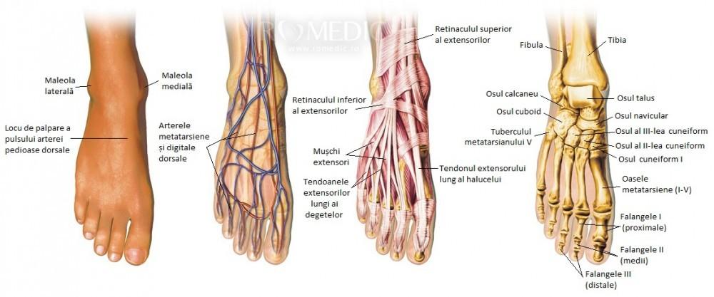 boala articulației piciorului feminin durerea în articulațiile piciorului cauzele și tratamentul