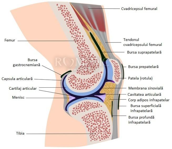 ce poate fi lezarea articulației genunchiului