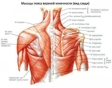 Din cauza căreia articulațiile genunchiului pot răni - infostraja.ro