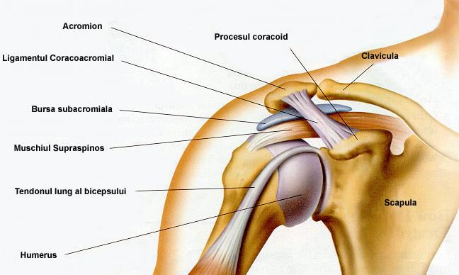 durere în articulația umărului atunci când joci sport