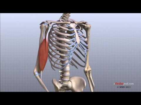 Tratamentul articulațiilor creak