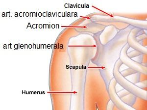 entorsa tratamentului articulației umărului