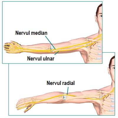 Articulatia cotului – normal vs. patologic
