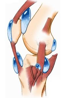 gel articular p.c 28 vivasan artroza pelvisului.-coapsa. articulații