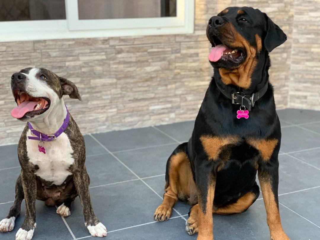 Suplimente pentru pielea & blana câinelui