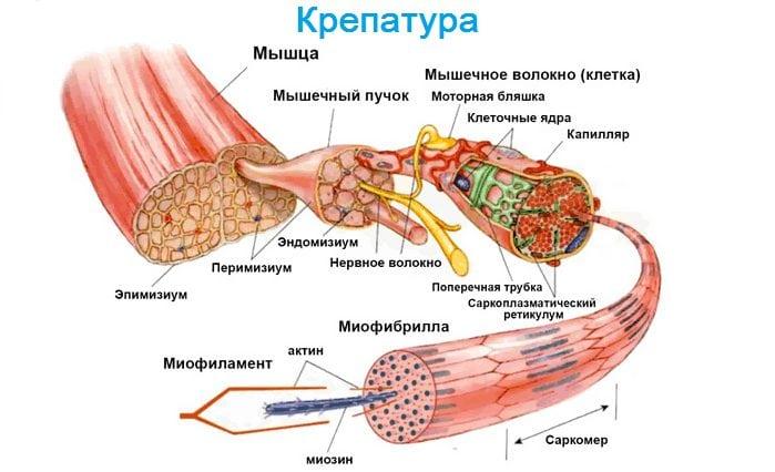 Rătăcirea cauzelor durerii articulare și a tratamentului