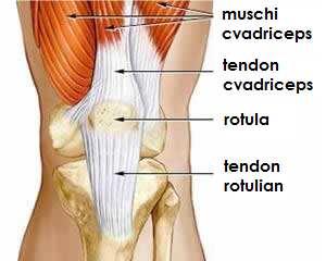 tendoane dureroase ale articulației genunchiului