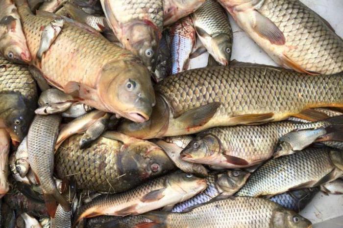 Subtilități de consum de produse din pește cu pancreatită