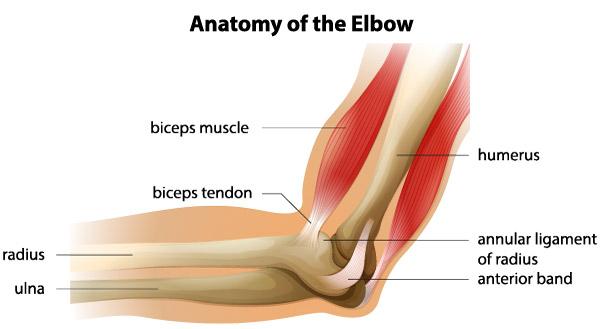 unguent pentru tendoanele articulației cotului deteriorarea ligamentului gleznei