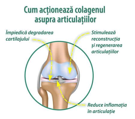 stimulează regenerarea cartilajului