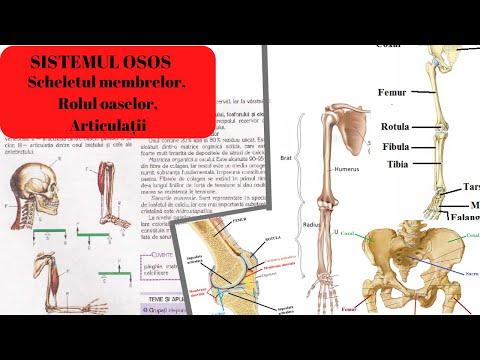 articulațiile rănesc cu presiune artrita de genunchi bilateral de grad 2